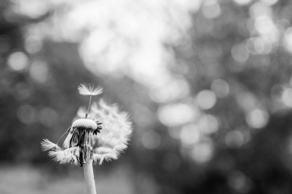 Poemas de desamor se enfocan en sentimientos que generan dichos momentos de partida, ruptura, soledad, desilusión, y como las palabras se convierten en fuentes sanadoras.
